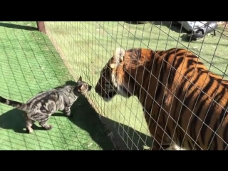 Big kitty and lil kitty go for the boop