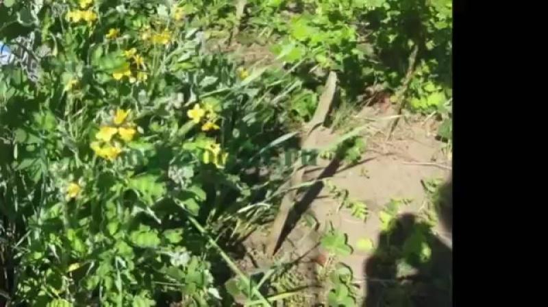 Как избавиться от тли. Борьба с тлей на растениях. Домашние натуральные средства