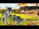 Дикие Животные и их детеныши Учим животных Развивающие мультики для самых маленьких Для детей видео