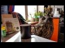Чай с совой травами и пчёлами Котики за окном ищут весну филин заваривает чай из сычей