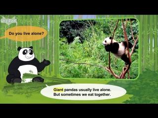 Meet the animals 26- giant panda - level 2 - by little fox