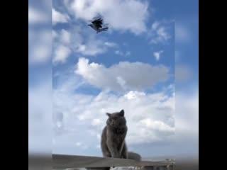 Чёрный ворон, чёрный ворон, что ж ты вьёшься надо мной, ты добычи не дождёшься, чёрный ворон, я не твой -)