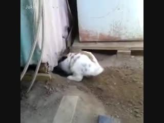 Взаимопомощь среди животных