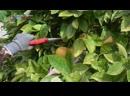 【K】France Travel-Menton _Lemon_Farm_La Maison du Citron_Côte dAzur_French Riviera