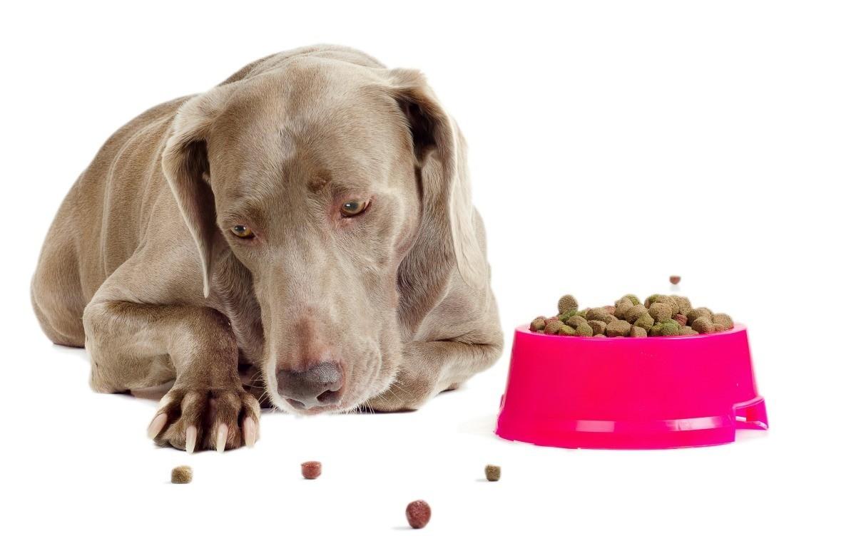 Собака Не Ест Похудела. Собака похудела: причины потери веса, что делать