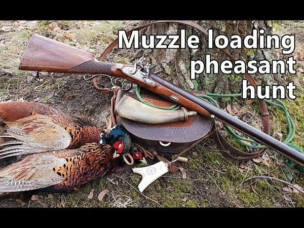 Muzzle loading pheasant hunt with flintlock