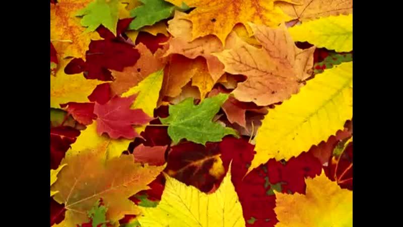 Alexander Volokhov - Autumn leaves Осенние листья (вальс)