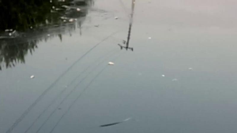 Мертвая рыба плавает в Исети