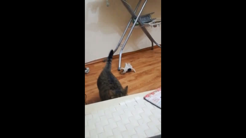 Кот vs Пёс по кличке игрушка. Бой века!