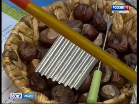 Завершается Год добровольцев. Какие проекты представили рязанцы на Всероссийский конкурс?