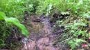 Как хорошо послушать звуки ЖУРЧАНИЕ РУЧЬЯ в лесу Лесной ручей пение птиц звуки природы релакс