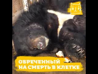 Медведя забрали из цирка и заперли в тесной клетке