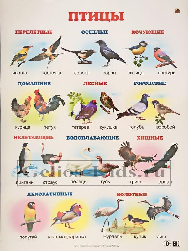 Перелетные птицы картинки с названиями и рассказ