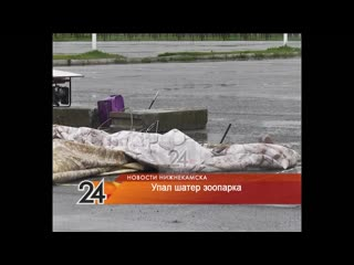 В Нижнекамске после сильного ветра рухнул зоопарк с рептилиями