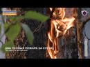 Мегаполис - Два лесных пожара за сутки - Югра