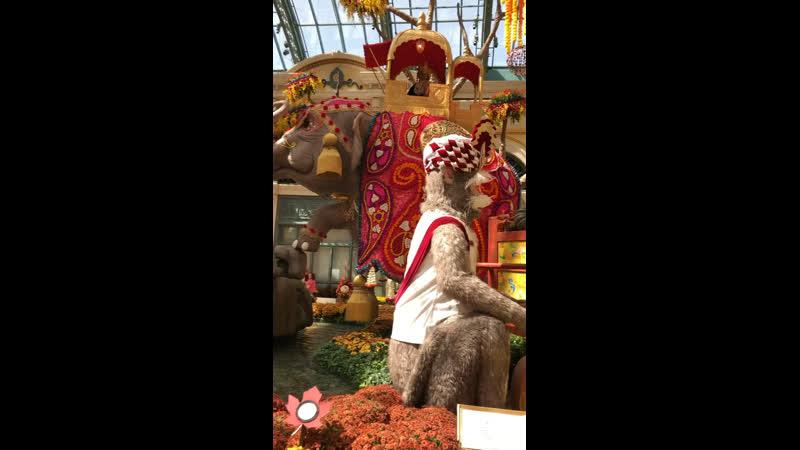 Лас Вегас - гостиница: «Белладжио»