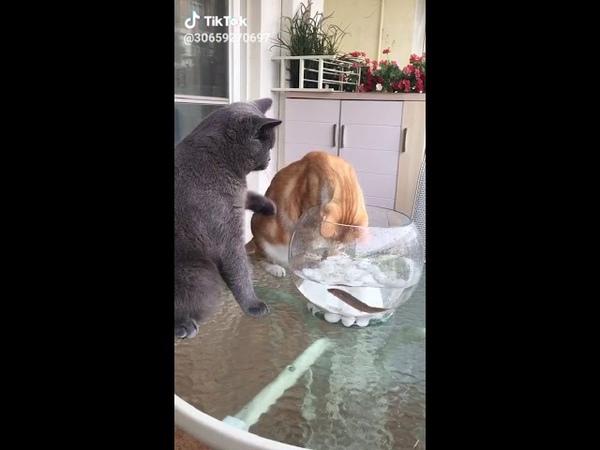 Котик защищает рыбку😂😂😂