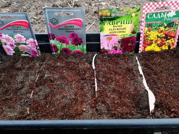 """Апрельские метаморфозы. Продолжаем посев однолетних цветов. Сегодня и погода """"нелётная""""..."""