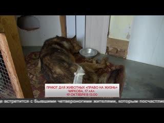 Приют для животных приглашает на День открытых дверей  ()