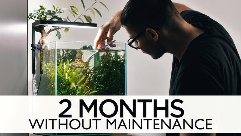 Lost World Nano Tank 2 months without maintenance