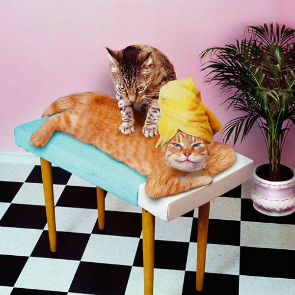 Картинки массажа с приколами
