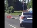 Семью уток в Солнечногорске гаишники пропустили через дорогу