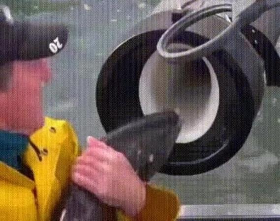 Рыба снаряд