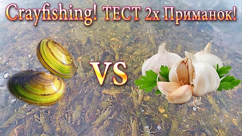 Сrayfishing-Ловля РАКОВ! Тест 2х Приманок: ПЕРЛОВИЦА-БЕЗЗУБКА Против ЧЕСНОКА!