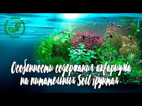 Особенности содержание аквариума на питательных Soil грунтах