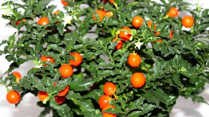 10 безобидных на первый взгляд растений, от которых лучше держаться как можно по