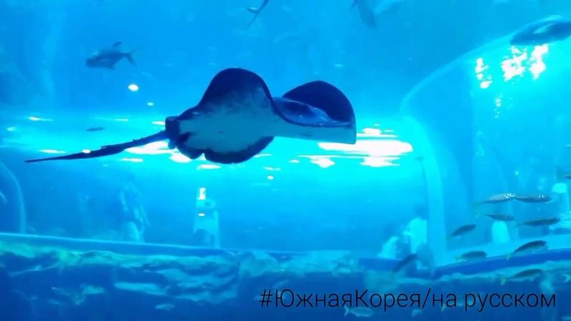 🐋ОКЕАНАРИУМ в Йосу Южная Корея 여수 아쿠아플라넷 Yeosu Aqua planet