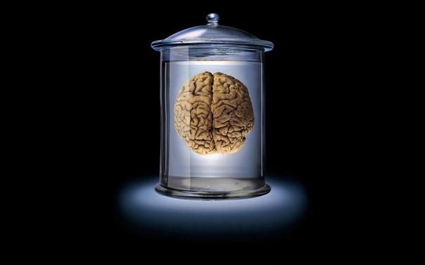 Арас Резваниан и его коллеги осмотрели мозг таких людей, которые специально завещали его науке, дабы попытаться понять, в чём же заключается их секрет.