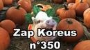 Zap Koreus n°350