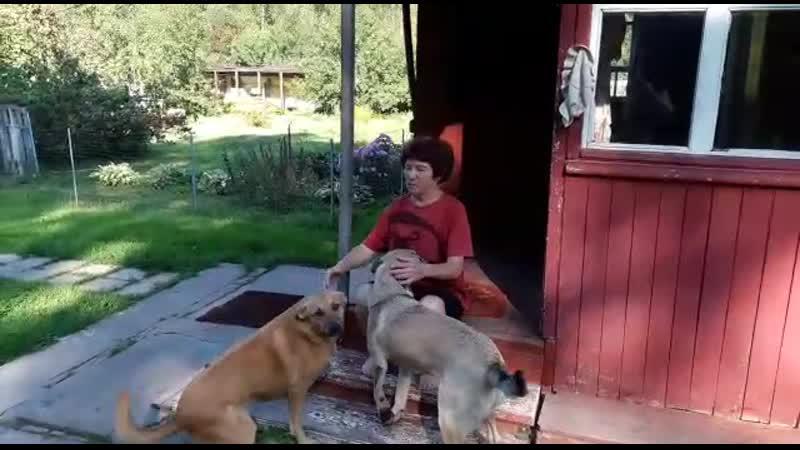 Ну вот они качественные фото и видео из дома от таких домашних девочек🙆♀️  Голди_из_леса и Нюша_тд так любят свою хозяйку Раи