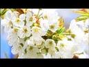 Спокойная Музыка Для Снятия Стресса - RELAXING PIANO - Music - Белый Шум / Stress Relief Music (2)