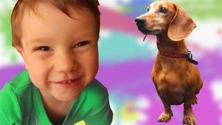Skip to my Lou| Petya training Sausage-like dogs