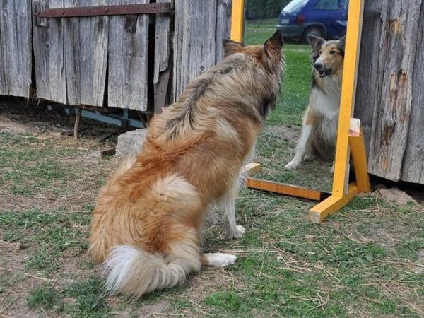 The Mirror / Spogulis (2019)