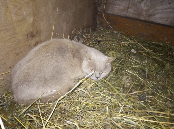 Потерялся котик  на улице Горловская , если кто ищет звоните 8 (917) 7