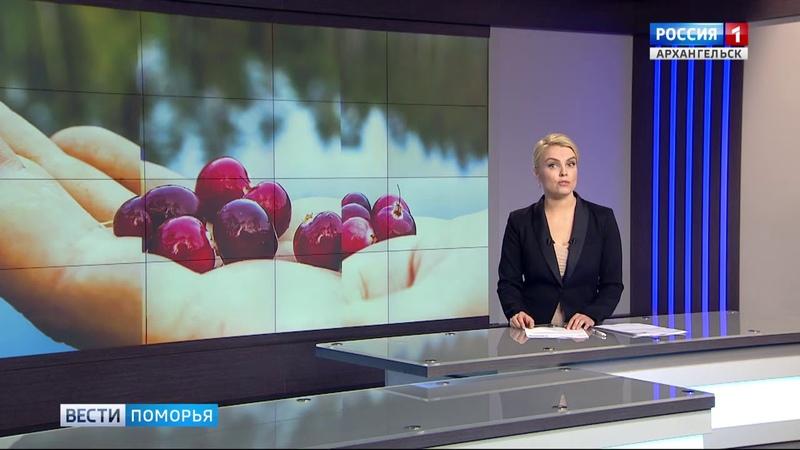 Репортаж телеканала Россия 1 Архангельск О клюквенной плантации