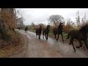Manlio Fani : il Branco di Cavalli Romani verso Cavalli a Roma - Video 03