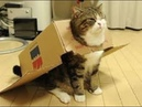 Funny cat Смешные КОТИКИ 13 11 2019 It's Possible to Watch Forever それは永遠に見ることが可能はい