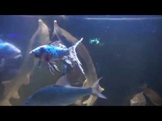 """Океанариум """"Акулий риф"""" (г. Ейск): акулы, пираньи, мурена, крабы, скаты и другие"""