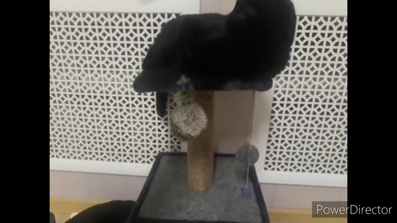 Кот компот играет в догонялки