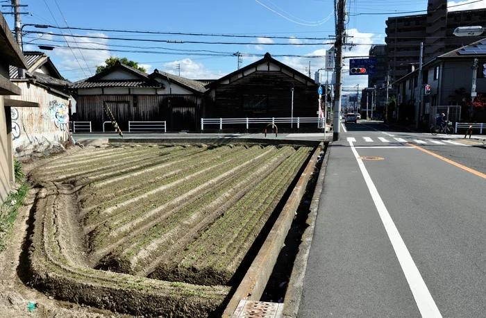 Фотографии Японии