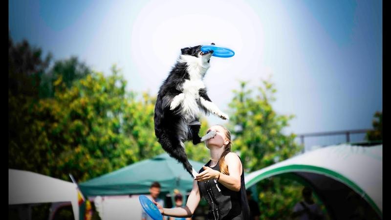 USDDN Dogfrisbee European Championship | Trnava 2018