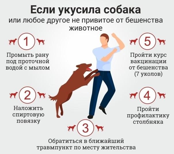 Первая помощь при укусе животных с картинками