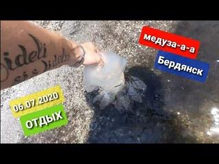 Медузы атакуют на Азовском море Отдых с медузами на побережье Бердянска 2020
