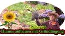 Humus aufbauen und Boden verbessern mit Gründüngung 🌻 Gründe für die Gründüngung 🌳