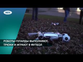 Роботы-гепарды выполняют трюки и играют в футбол