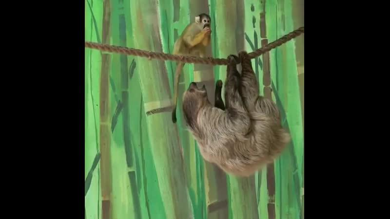 Ленивца ограбили ktybdwf juhf bkb ktybdwf juhf bkb ktybdwf juhf bkb
